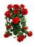 "Geranium Hanging Plant - 22"" Long - Box of 6 - Red"