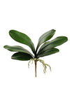 "Phalaenopsis Orchid Leaves - 17"" Wide - Set of 12 - Green"