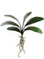 "Phalaenopsis Orchid Leaves - 21"" Wide - Box of 12 - Green"