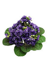 "Violet Bush - 12"" Tall - Box of 12 - Choice of Color"