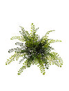 "Maidenhair Fern - 15"" Diameter - Set of 12 - Green"