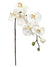 "Phalaenopsis Orchid Stem - 31"" Tall - Box of 12 - Cream"