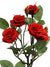 "Mini Rose Branch Spray - 25.5"" Tall - Set of 12 - Choice of Color"