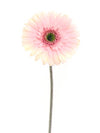 "Gerbera Daisy Stem - 25"" Tall - Box of 24 - Choice of Color"