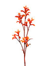 "Kangaroo Paw Branch Spray - 30"" Tall - Box of 24 - Orange"