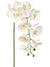 "Phalaenopsis Orchid Stem - 33.5"" Tall - Box of 12 - Choice of Color"