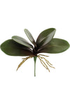 "Phalaenopsis Orchid Leaves - 11"" Wide - Set of 12 - Green"