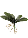 "Phalaenopsis Orchid Leaves - 15"" Wide - Box of 12 - Green"