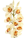 "Cymbidium Orchid Stem - 30"" Tall - Set of 12 - Choice of Color"