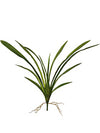 "Cymbidium Orchid Leaves - 26"" Wide - Set of 12 - Green"