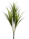 "Dracaena Marginata Bush - 29"" Tall - Box of 12 - Green"