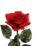 "Real Touch Rose Stem - 22"" Tall - Set of 24 - Choice of Color"