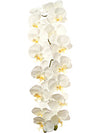 "Phalaenopsis Orchid Stem - 49"" Tall - Set of 6 - Choice of Color"