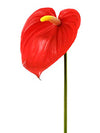 "Anthurium Stem - 29"" Tall - Set of 12 - Choice of Color"