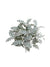 "Dusty Miller Bush - 16"" Diameter - Box of 12 - Green"
