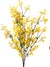 "Forsythia Bush - 28"" Tall - Box of 12 - Yellow"