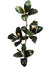 "Magnolia Foliage Spray - 39"" Tall - Box of 12 - Natural"