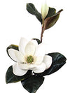 "Magnolia Stem - 26"" Tall x 6"" Diameter - Set of 6 - Choice of Color"