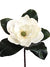 "Magnolia Pick - 15"" Tall x 8"" Diameter - Box of 6 - White"