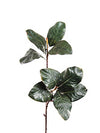 "Magnolia Foliage Spray - 29"" Tall - Set of 12 - Green"