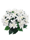 "Stephanotis Bush - 12"" Tall - Box of 12 - White"