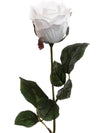 "Rose Bud Stem - 18"" Tall - Box of 24 - Choice of Color"