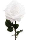 "Rose Stem - 20"" Tall - Set of 12 - Choice of Color"