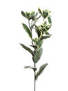 "Snow on the Mountain Spray - 25"" Tall - Box of 36 - Variegated Green"