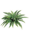 "Boston Fern - 34"" Diameter with 42 Fronds - Box of 6 - Green"