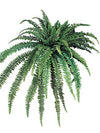 "Boston Fern - 82"" Diameter with 77 Fronds - Set of 2 - Green"
