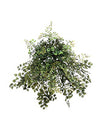 "Maidenhair Fern - 19"" Diameter - Set of 6 - Green"