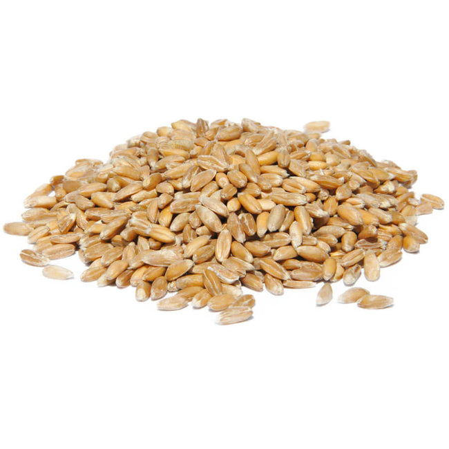 Organic Hulled Wheat
