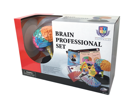 STEM BRAIN PROFESSIONAL SET Model