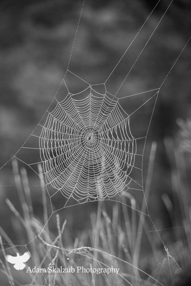 Webs - Adam Skalzub Photography