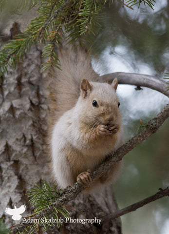 Spirit Squirrel 2 - Adam Skalzub Photography