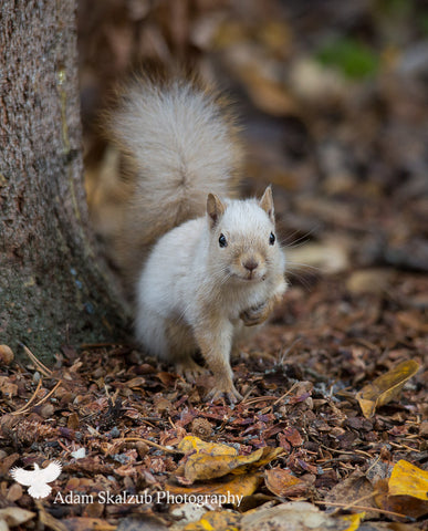 Spirit Squirrel - Adam Skalzub Photography