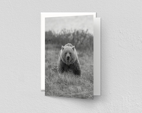 Black and White Grizzly