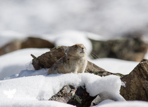 Snowy Surprise! 2 - Adam Skalzub Photography