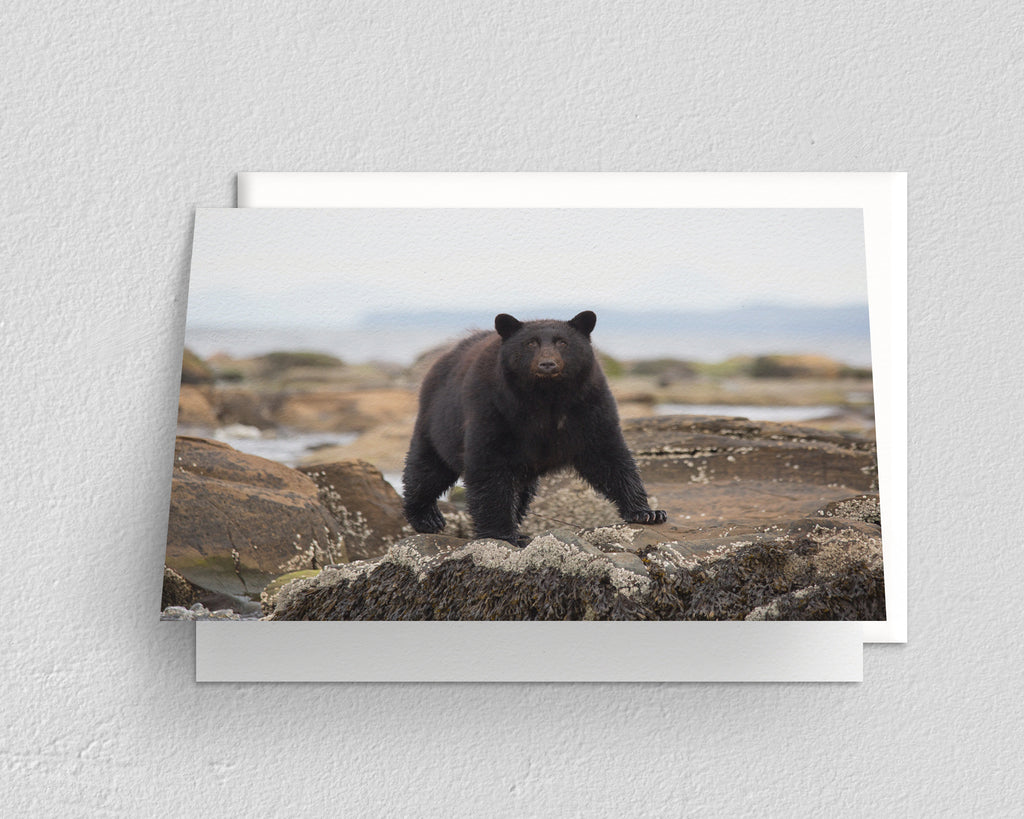Pacific Coast Black Bear