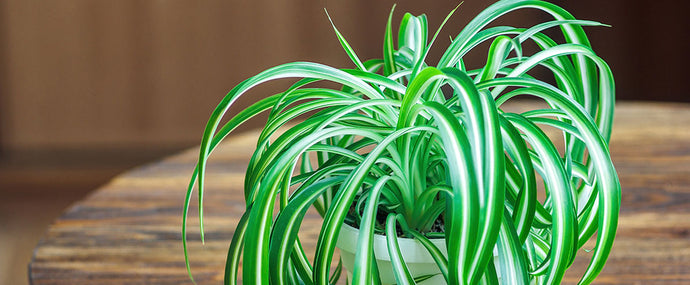 9 indoor plants that are almost impossible to kill