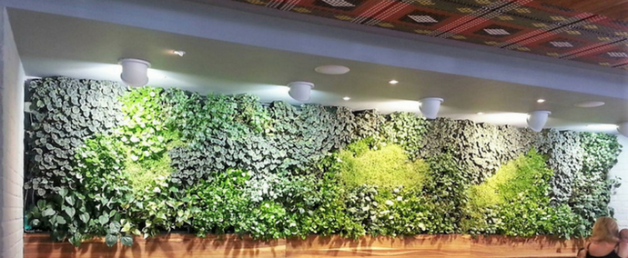 8 reasons not to get a green wall