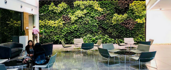 Guide to picking the right plants for your decorative green wall