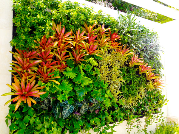 Growup vertical farming | colorful, decorative vertical living wall