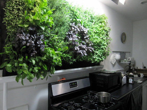 Growup vertical farming | Vertical herb garden above stove