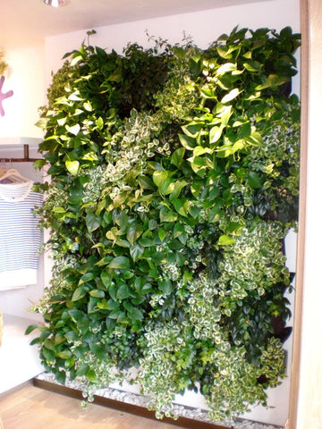 Growup vertical farming | living wall in your home