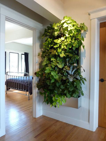 Growup vertical farming | grow wall in the bedroom