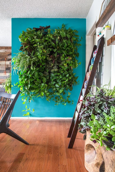 Growup vertical farming | green wall in the dining room