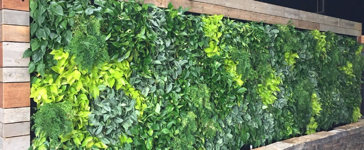 GrowUp vertical garden at the Belching Beaver