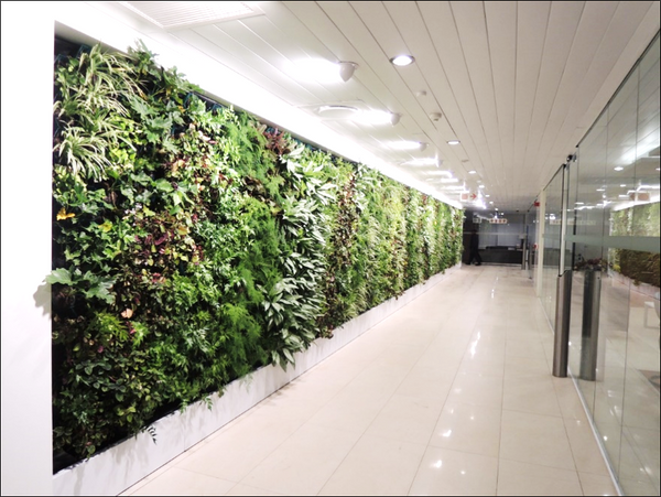 The right lighting can create a dramatic effect on your green wall