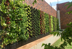 GrowUp green walls